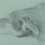Bear (graphite on pastel paper)