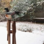 First snow, Woodstock, chimes, deck, yard