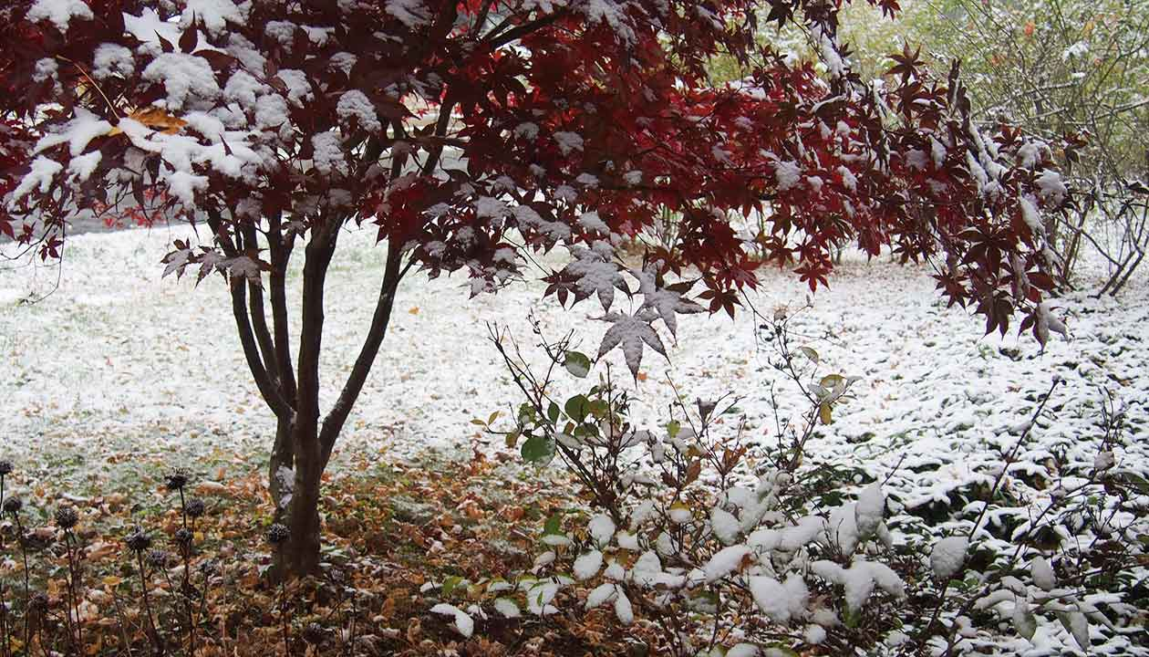 First snow, Woodstock, red maple & more